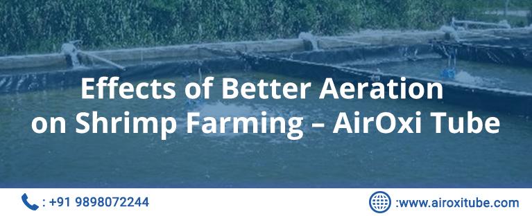 Effects of Better Aeration on Shrimp Farming – AirOxi Tube