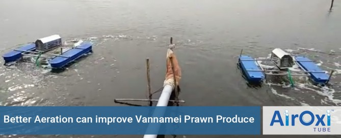 Better Aeration can improve Vannamei Prawn Produce - AirOxi Tube