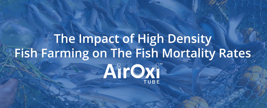 The Impact of High Density Fish Farming on the Fish Mortality Rates - AirOxi Tube