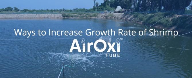 Ways to Increase Growth Rate of Shrimp-AirOxi Tube