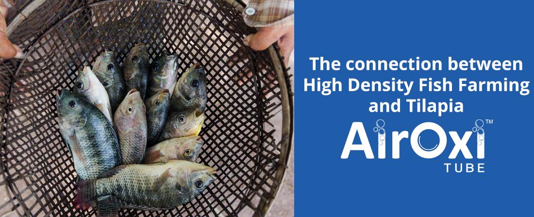 High Density Fish Farming and Tilapia