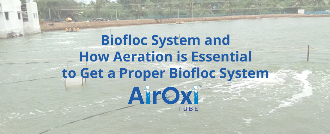 Biofloc System and How Aeration is Essential to Get a Proper Biofloc System-AirOxi Tube