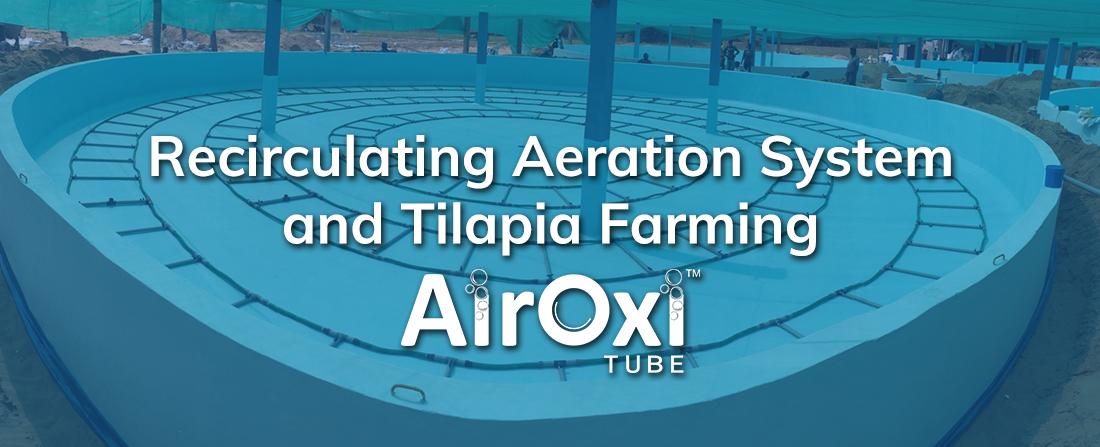 Recirculating Aeration System and Tilapia Farming-AirOxi Tube
