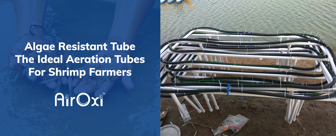 Algae Resistant Tube The Ideal Aeration Tubes For Shrimp Farmers-AirOxi Tube