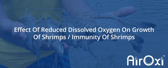 Effect Of Reduced Dissolved Oxygen On Growth Of Shrimps-AirOxi Tube