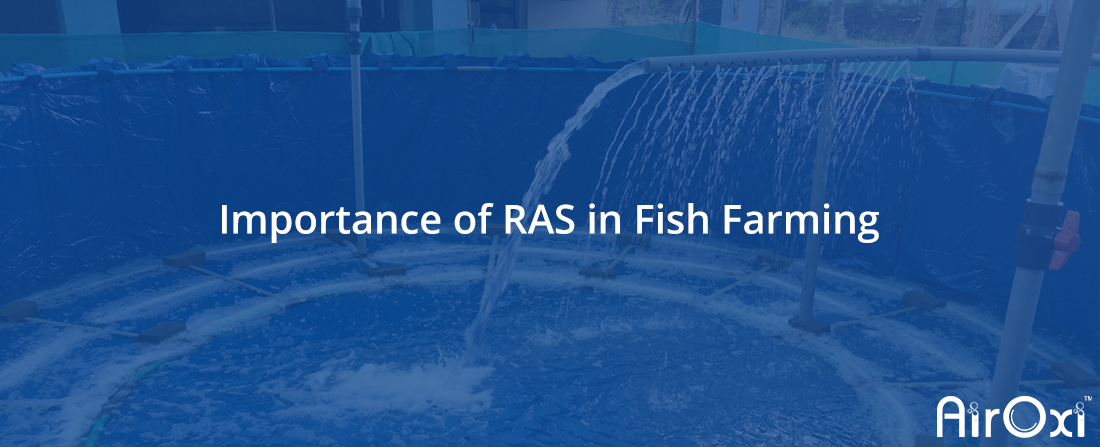 Importance of RAS in Fish Farming