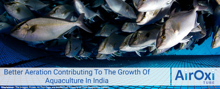 Better Aeration Contributing To The Growth Of Aquaculture In India