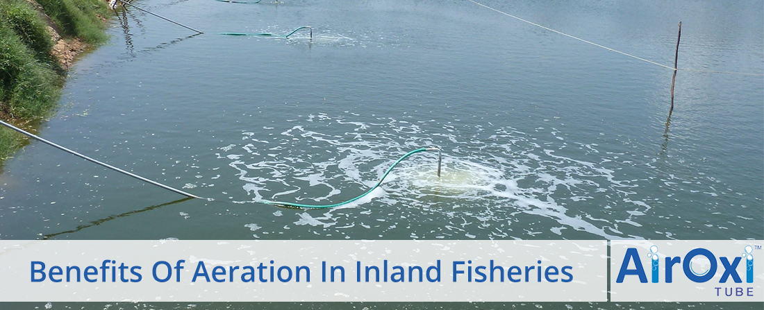 Benefits Of Aeration In Inland Fisheries-AirOxi Tube
