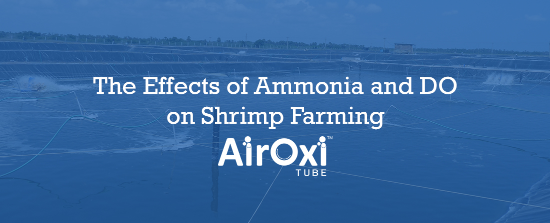 The Effects of Ammonia and DO on Shrimp Farming