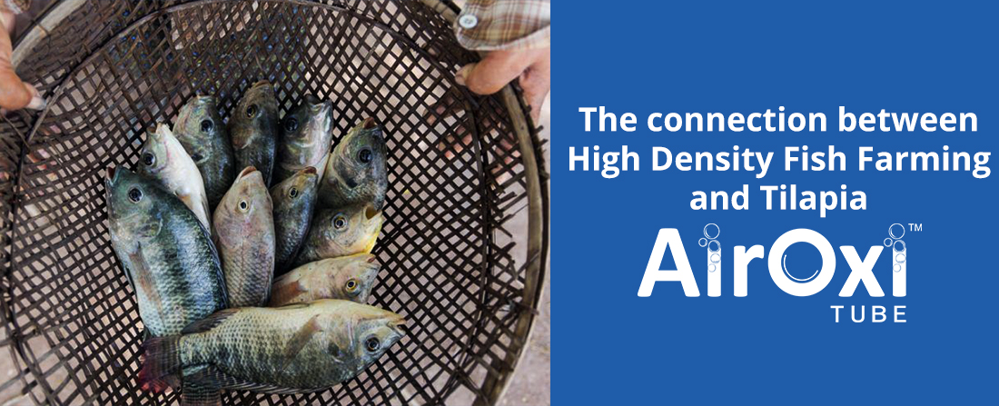 High Density Fish Farming and Tilapia