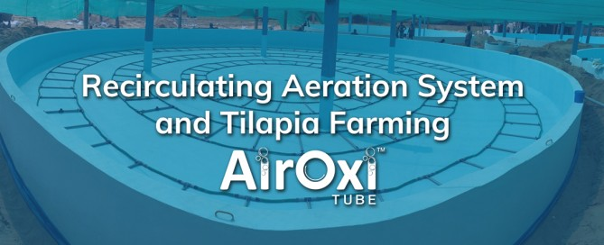 Recirculating Aeration System and Tilapia Farming-AirOxi Tube