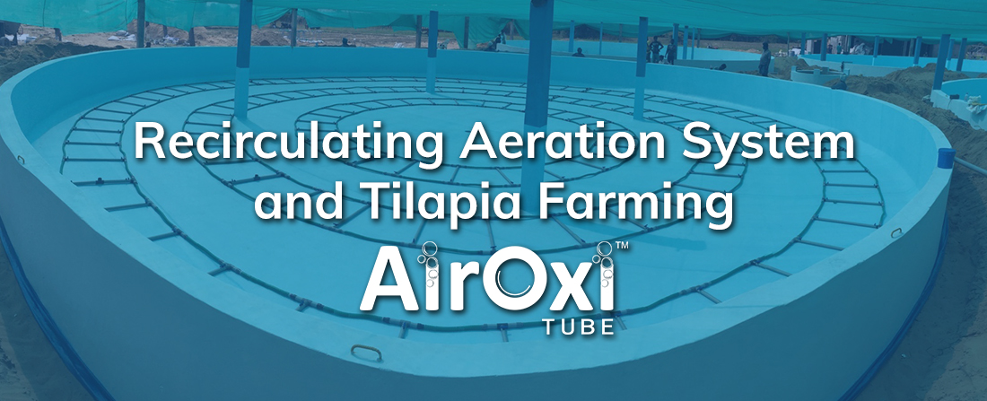 Recirculating Aeration System and Tilapia Farming