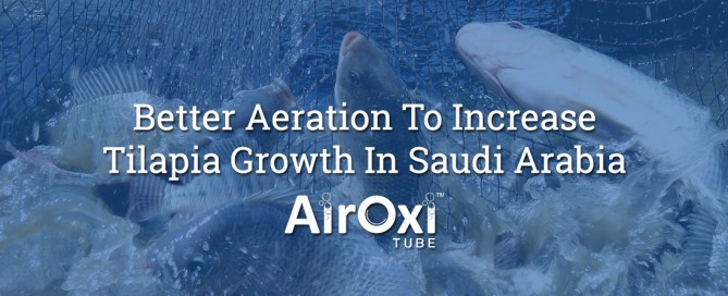 Better Aeration To Increase Tilapia Growth In Saudi Arabia-AirOxi Tube
