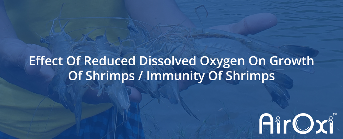 Effect Of Reduced Dissolved Oxygen On Growth Of Shrimps / Immunity Of Shrimps