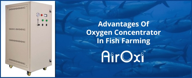 Advantages Of Oxygen Concentrator In Fish Farming-AirOxi Tube-Aeration Solutions