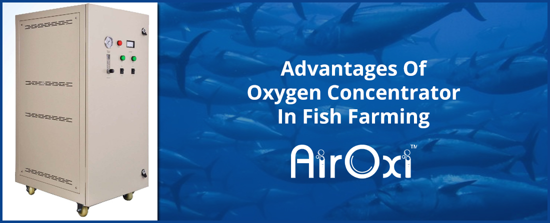 Advantages Of Oxygen Concentrator In Fish Farming
