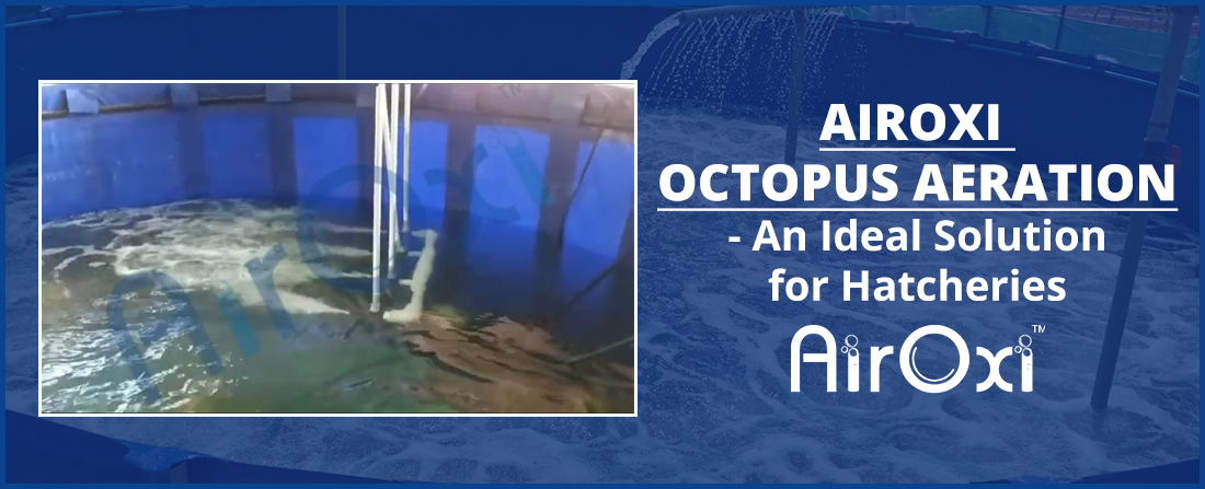AirOxi Octopus Aeration-An Ideal Solution for Hatcheries-AirOxi Tube