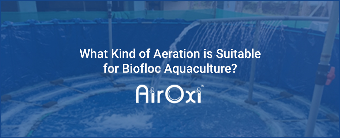 What Kind of Aeration is Suitable for Biofloc Aquaculture?
