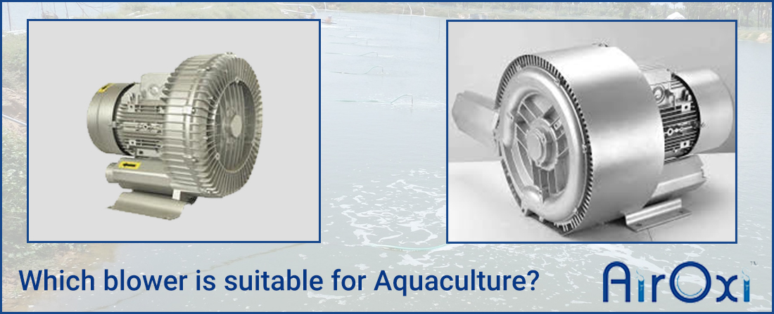 Which blower suitable for Aquaculture?