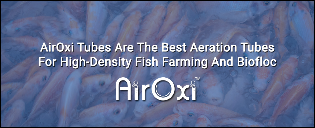 AirOxi Tubes Are The Best Aeration Tubes For High-Density Fish Farming And Biofloc
