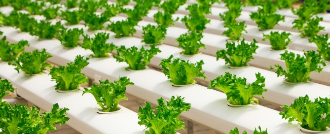 Aeration Solutions for Hydroponics-AirOxi Tube