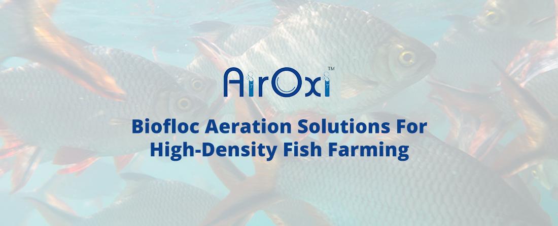 Biofloc Aeration Solutions For High-Density Fish Farming